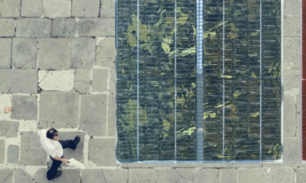 Panele słoneczne zastąpią płyty chodnikowe w smart cities