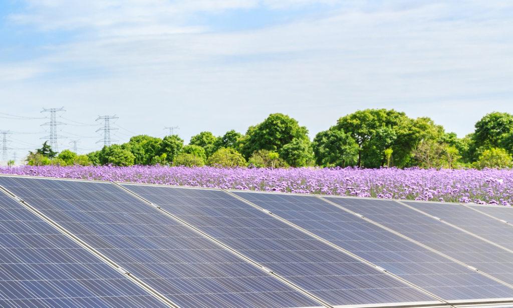 DNB i EBI sfinansują budowę instalacji fotowoltaicznych w Polsce o mocy 65,6 MW