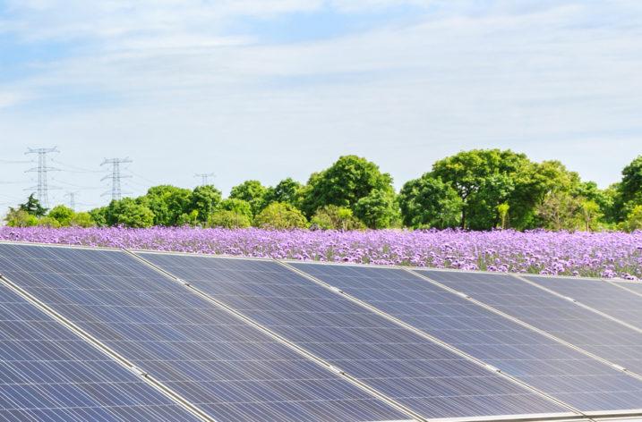 PGE Energia Odnawialna uruchomiła farmę PV o mocy 1MW