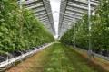 Rozwiązania dla agrofotowoltaiki od BayWa r.e